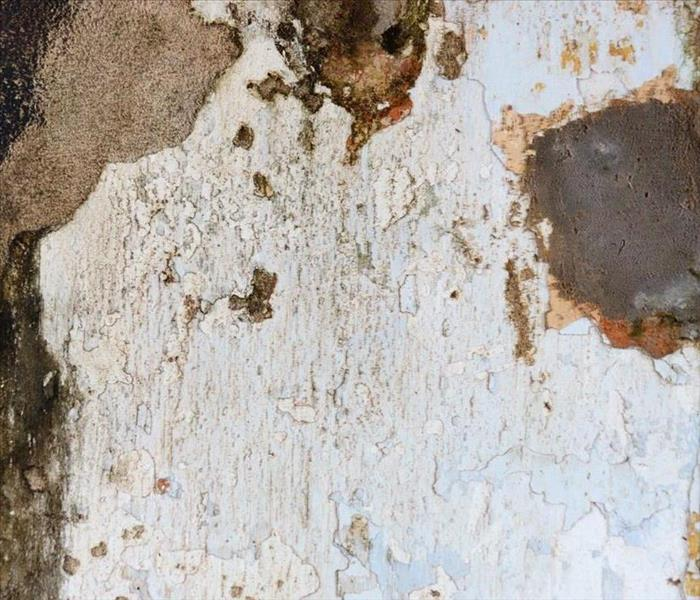 Mold Remediation Tips to Prevent Mold Damage in Your Home