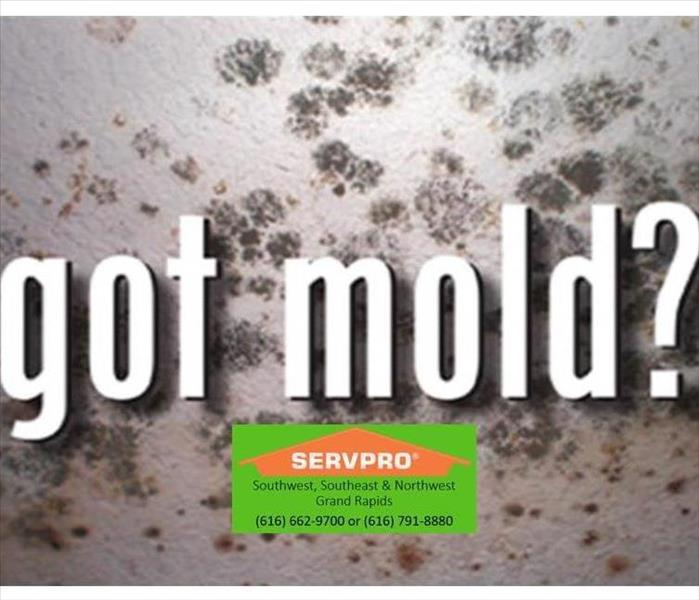 Mold Remediation What to do with Mold!
