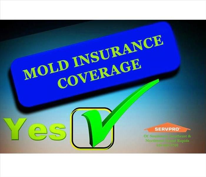 Mold Remediation Southwest Grand Rapids Know your insurance coverage for Mold.