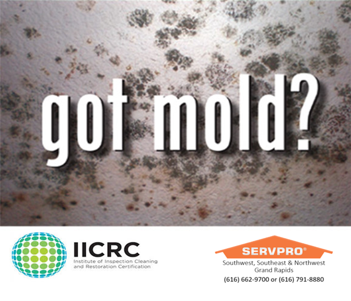 Mold Remediation Southwest Grand Rapids, Who can clean up Mold?